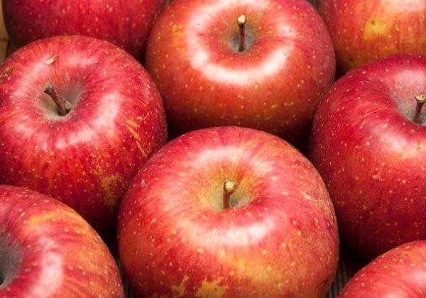 オーガニック農産物ネットワーク「ふるさと21」森社長インタビュー