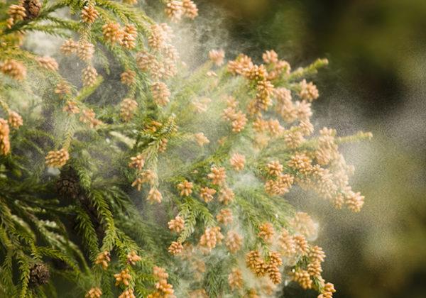先取りしよう!〜花粉症対策お役立ち情報
