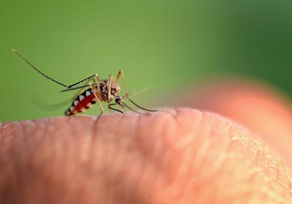 虫刺されとアレルギー